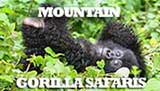 Mountain Gorilla Safaris